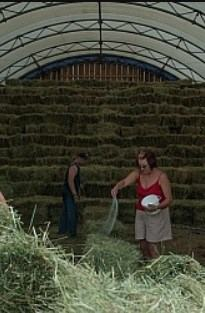 How to salting hay