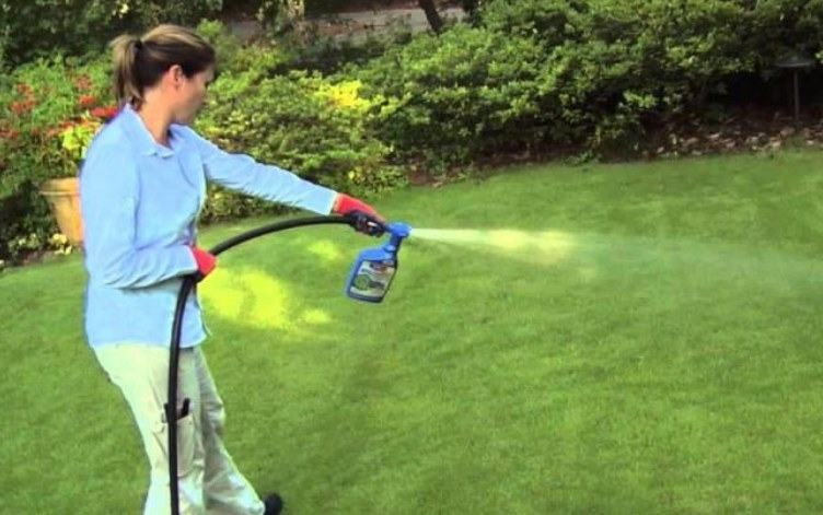 best time to spray weed killers