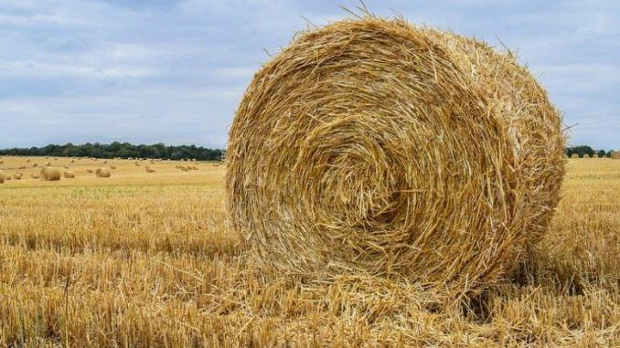 what is hay made of