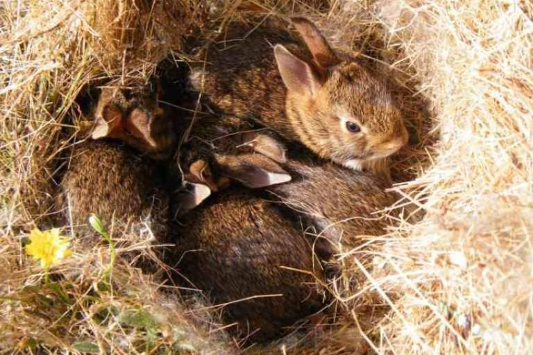 How Many Litters Can A Rabbit Have In A Year