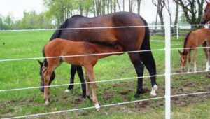 best electric fence for horses reviews