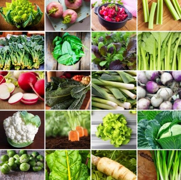 winter vegetables to plant